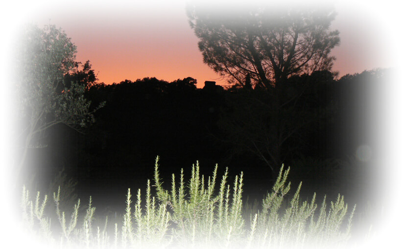Tuscan Tales Chapter 14  – Country Cacophony